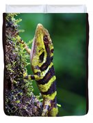 Giant Anole Dactyloa Microtus Male Duvet Cover