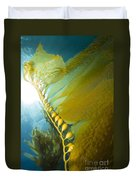 Giant Kelp, Catalina Island, California Duvet Cover