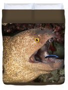 Giant Moray Eel And Cleaner Wrasse Duvet Cover