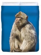 Gibraltar Barbary Macaque Macaca Duvet Cover