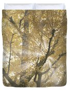 Ginkgo Tree With Sunlight Streaming Duvet Cover