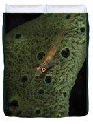 Goby On A Sponge, Fiji Duvet Cover