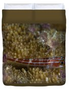 Goby On Coral, Australia Duvet Cover