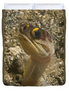 Gold-speck Jawfish Pouting, North Duvet Cover