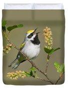 Golden-winged Warbler Vermivora Duvet Cover