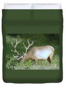 Grazing Bull Elk  Duvet Cover