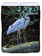 Great Blue Heron, Florida Duvet Cover