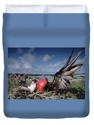 Great Frigatebirds Courting Duvet Cover
