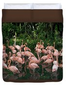 Greater Flamingo Phoenicopterus Ruber Duvet Cover