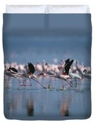 Greater Flamingos Run Through Shallow Duvet Cover