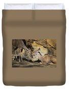 Greater Kudu Affection Duvet Cover