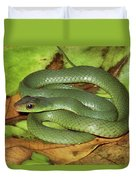 Green Racer Drymobius Melanotropis Amid Duvet Cover
