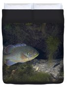 Green Sunfish Swimming Along The Rocky Duvet Cover