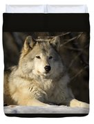 Grey Wolf Canis Lupus In Ecomuseum Zoo Duvet Cover