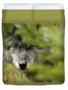 Grey Wolf, Outside Golden, British Duvet Cover