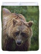 Grizzly Bear Ursus Arctos, Denali Duvet Cover