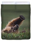 Grizzly Bear Ursus Arctos Stretching Duvet Cover