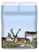 Group Of Caribou Resting On Alpine Duvet Cover