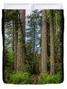 Group Of Redwoods Duvet Cover