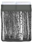 Grove Of Birch Trees Duvet Cover