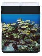 Grunt School Along Coral Reef Cocos Duvet Cover by Flip Nicklin