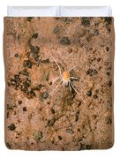 Harvestman Crosbyella Sp. In Cave Duvet Cover