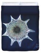 Heliodiscus Sp. Radiolarian Lm Duvet Cover