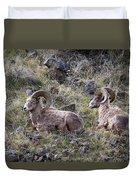 Hillside Rams Duvet Cover
