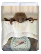 Hoffmanns Two-toed Sloth Orphan Duvet Cover by Suzi Eszterhas