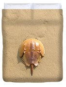 Horseshoe Crab In The Sand Campground Beach Cape Cod Eastham Ma Duvet Cover