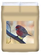 Housefinch IIi Duvet Cover