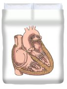 Illustration Of Heart Anatomy Duvet Cover by Science Source