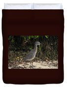 Immature Blacked Crowned Night Heron Duvet Cover