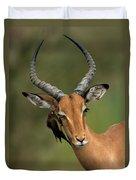 Impala Aepyceros Melampus Buck Africa Duvet Cover