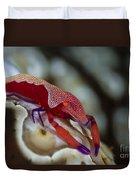 Imperator Commensal Shrimp On Eyed Sea Duvet Cover