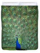 Indian Peafowl Pavo Cristatus Male Duvet Cover