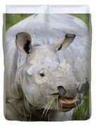 Indian Rhinoceros Grazing Kaziranga Duvet Cover