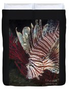 Indonesian Lionfish On A Wreck Site Duvet Cover