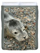 Injured Harbor Seal Duvet Cover