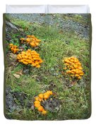 Jack Olantern Mushrooms 15 Duvet Cover