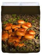 Jack Olantern Mushrooms 30 Duvet Cover