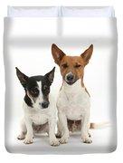 Jack Russell Terrier Dog, Rockie Duvet Cover