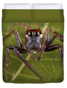 Jumping Spider Papua New Guinea Duvet Cover by Piotr Naskrecki