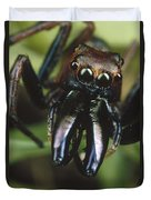 Jumping Spider Portrait, Queensland Duvet Cover