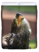 Juvenile Bald Eagle Duvet Cover