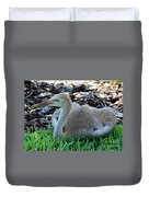Juvenile Sandhill Crane At Rest Duvet Cover