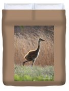 Juvenile Sandhill In The Marsh Duvet Cover