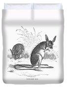 Kangaroo Rat Duvet Cover