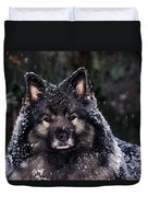 Keeshond Dog, Winnipeg, Manitoba Duvet Cover