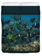 King Angelfish Holacanthus Passer Duvet Cover by Pete Oxford